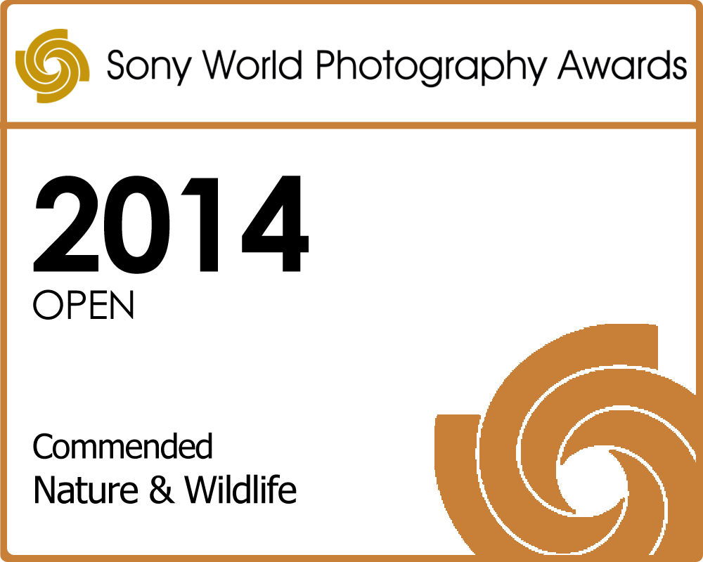 Sony World Photography Awards 2014 Entry Nature-and-Wildlife_Commended